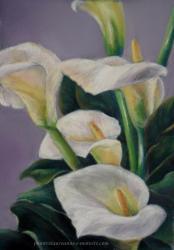 dessin arum en fleur