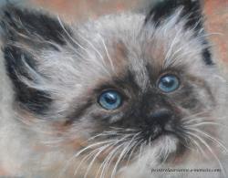 chat aux yeux bleus au pastel sec Laure-Anne