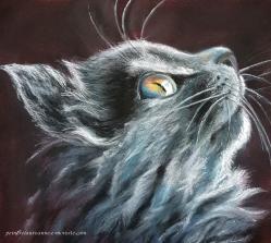 Chat bleu noir