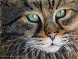 Chat yeux bleus jaune