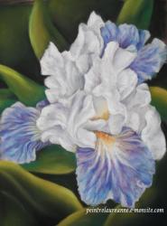 iris bleue dessin au pastel sec laure-anne