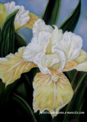iris jaune dessin de fleur au pastel sec