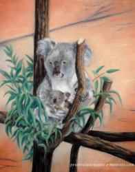 pastel sec koalas