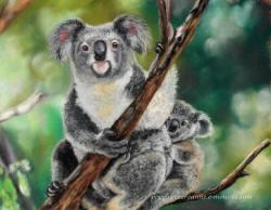 Koalas au pastel sec