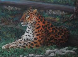 dessin leopard pastel sec