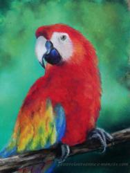 perroquet au pastel sec