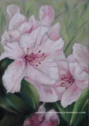 dessin pastel sec  fleurs de Rhododendron