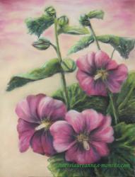 rose tremière pourpre dessin au pastel sec