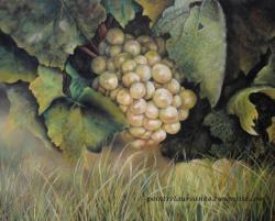 la vigne de Sannois, dessin au pastel sec