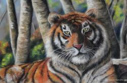Tigre pastel sec