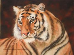 TIGRE au pastel sec. Portrait animalier