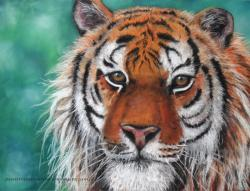 pastel sec tigre