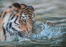 Tigre dans l eau
