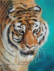 Tigre pastel sec laure-anne