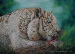 pastel sec tigre blanc